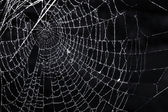 Spider web with dew — Stock Photo