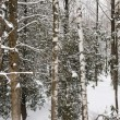 Winter forest landscape panorama — Stock Photo #59668437