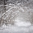 Snowy winter path in forest — Stock Photo #59668499