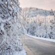 Scenic road in winter forest — Stock Photo #59669083