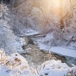 Forest creek after winter storm — Stockfoto #59669311