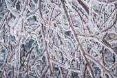 Winter branches in ice — Stock Photo