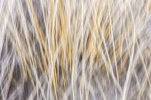 Winter grass abstract — Stock Photo