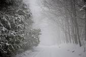 Winter road during snowfall — Stock Photo
