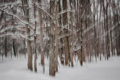 Winter forest abstract — Stock Photo