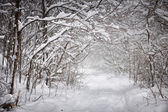 Snowy winter path in forest — Stock Photo