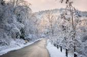 Winter road in snowy forest — Stock Photo