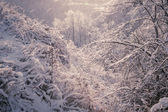 Winter forest after ice storm — Stock Photo