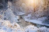 Forest creek after winter storm — Stock Photo