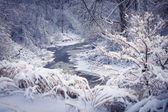 Forest river in winter snow — Stock Photo