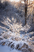 Trees in snowy forest after winter storm — Stock Photo