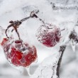 Icy branch with crab apples — Stok fotoğraf #63256801