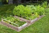 Vegetable garden in raised boxes — Stock Photo