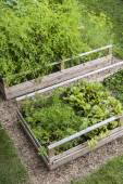 Vegetable garden in raised boxes — Stock Photo