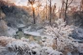 Лесной ручей после метели — Стоковое фото