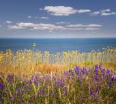Wildflowers and ocean — Stock Photo