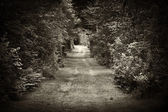 Dirt road through forest — Stock Photo