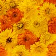 Calendula flowers background — Stock Photo #72979409