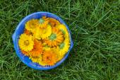Calendula flowers in a bowl — Stock Photo
