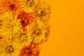 Calendula flowers background — Stock Photo