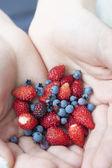 Wild strawberries and blueberries — Stock Photo