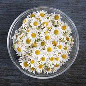 Chamomile flowers in bowl — Stock Photo