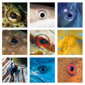 Closeups of different fish eyes — Stockfoto