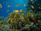 Colorful coral reef off the coast of Hurghada, Egypt — Stock Photo