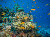 Colorful coral reef off the coast of Hurghada, Egypt — Photo