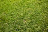 Mown grass field — Stock Photo