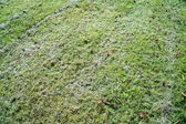 Mown grass field — Stock Photo