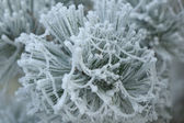 Frosty white frost — Stock Photo