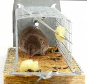 Mouse trap — Stock Photo