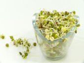 Seed sprouts — Stock Photo