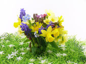 Flower power — Stock Photo