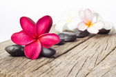 Red Frangipani Flowers — Stock Photo
