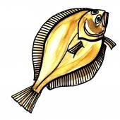 Flounder fish. Isolated on a white background — Stock Photo