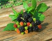 Branch of Blackberry with leaf — Stock Photo