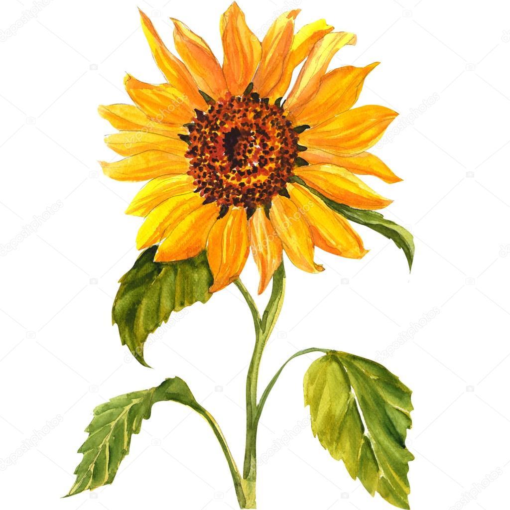 Sunflower Paint Color