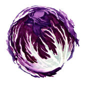 Head of red cabbage isolated — Stock Photo