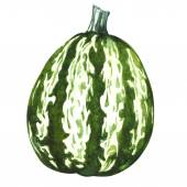 Green pumpkin gourd isolated — 图库照片