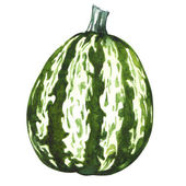 Green pumpkin gourd isolated — Photo