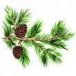 Pine branch with cones on a white background — Foto de Stock   #56953631