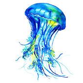 Ocean Water Jellyfish — Stock Photo