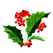 Holly berry icon, Christmas symbol — Stock Photo