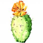 Opuntia cactus with yellow flower, watercolor painting. — Stock Photo
