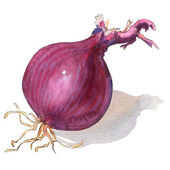 Red onion bulb isolated on white — Stock Photo