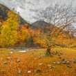 Autumn in Arkhyz — Stock Photo #58656069
