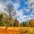 Autumn in Arkhyz — Stock Photo #58656077