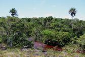 Canio Cristales mountain river. Colombia — Stock Photo